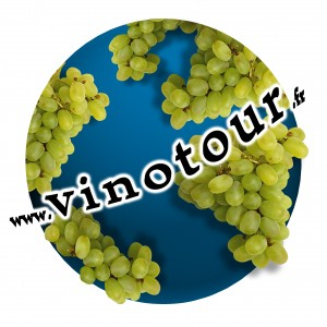 Rambling wine tours - VINOTOUR